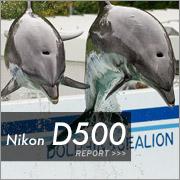 Nikon D500 フォトプレビュー