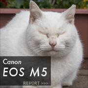 Canon EOS M5フォトプレビューはこちら