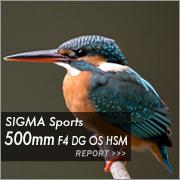 SIGMA Sports 500mm F4 DG OS HSM フォトプレビュー