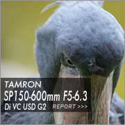 TAMRON  SP 150-600mm F5-6.3 Di VC USD G2フォトプレビュー