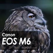 Canon EOS M6フォトプレビューはこちら