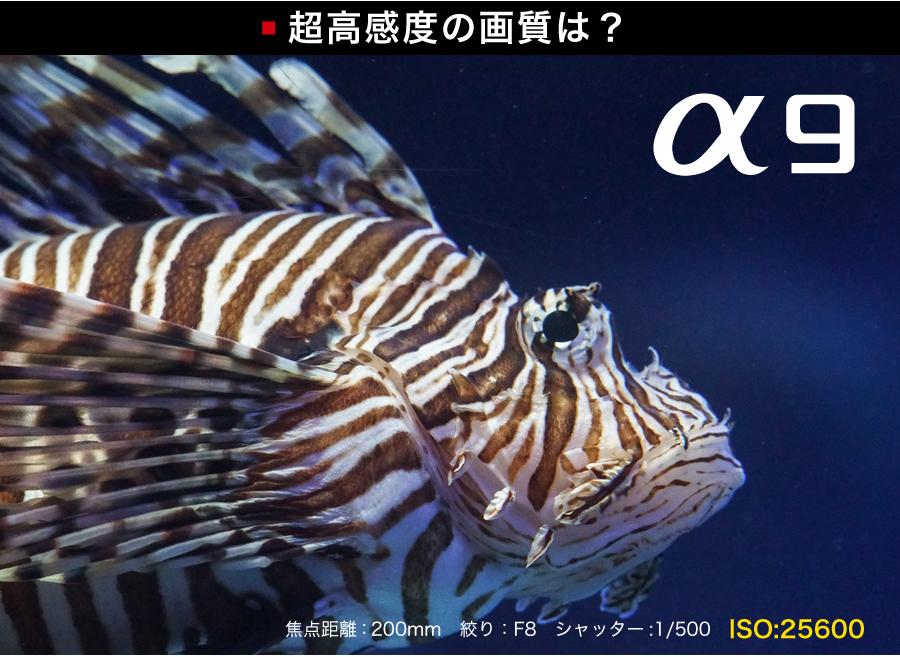 高感度_a9