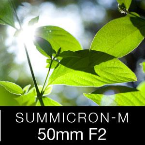 ズミクロンM50mmのKasyapaはこちら