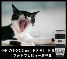 EF70-200mm F2.8L IS II USM Kasyapa
