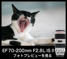 EF70-200mm F2.8L IS II USM Kasyapa
