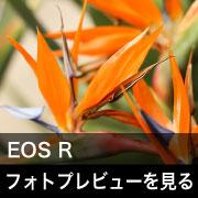 Canon EOS R フォトプレビューはこちら