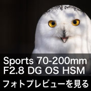 SIGMA Sports 70-200mm F2.8 DG OS HSM フォトプレビュー