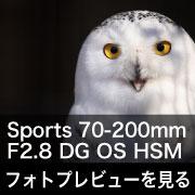 SIGMA Sports 70-200mm F2.8 DG OS HSM フォトプレビュー