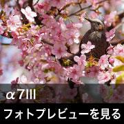 SONY (ソニー) α7III フォトプレビュー