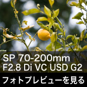 TAMRON (タムロン) SP 70-200mm F2.8 Di VC USD G2 A025N(ニコン用)フォトプレビュー