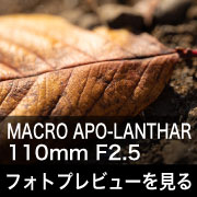 Voigtlander MACRO APO-LANTHAR 110mm F2.5 フォトプレビュー