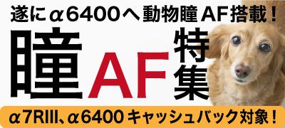 α6400に動物瞳AF機能追加!