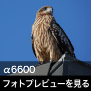 SONY (ソニー) α6600 フォトプレビュー