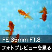 SONY (ソニー) FE 35mm F1.8 フォトプレビュー