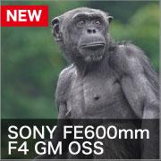 SONY FE600mm F4 GM OSS
