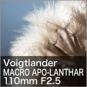 Voigtlander MACRO APO-LANTHAR 110mm F2.5