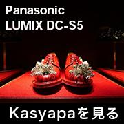 Panasonic LUMIX DC-S5 フォトプレビュー