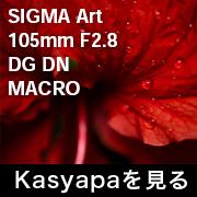 SIGMA Art 105mm F2.8_e フォトプレビュー